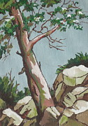 Mountain Pine Tree Painting Framed Prints - Lone Tree Framed Print by Sandy Tracey