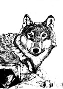 Pack Animal Drawings Posters - Lone Wolf BW Poster by Gail Schmiedlin