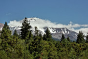 Snow Capped Mountains Prints - Lonely as God and white as a winter moon - Mount Shasta California Print by Christine Till