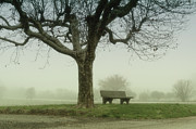 Park Scene Metal Prints - Lonely Bench Beneath Tree In Winter Metal Print by Gil Guelfucci