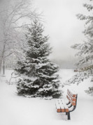 Snowy Night Photo Posters - Lonely Bench Poster by Liviu Leahu