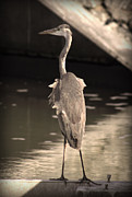 River View Pyrography Prints - Lonely Flamingo Bird Print by Radoslav Nedelchev