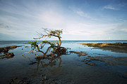Caribbean Sea Framed Prints - Lonely Mangrove Framed Print by Matt Tilghman