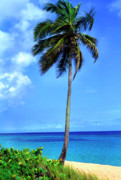 Puerto Rico Prints - Lonely Palm Tree Los Tubos Beach Print by Thomas R Fletcher