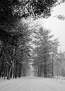 Snow And Trees Framed Prints - Lonely Road Framed Print by Edward Myers