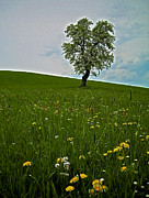 Wandern Posters - Lonely Tree ...  Poster by Juergen Weiss