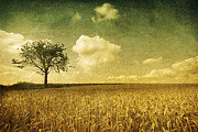 Lonely Tree Prints - Lonely Tree - Textured Print by David Herreman