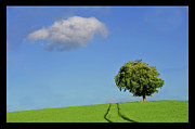 Field. Cloud Posters - Lonely Tree Against Blue Sky Poster by Ernie Watchorn