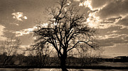 Dh Images Posters - Lonely Tree at Sunset Poster by Sergio Aguayo