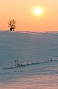 Lonely Tree Print by Catalin Pomeanu