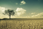 Lonely Tree Prints - Lonely Tree Print by David Herreman