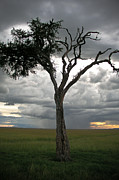 Lonely Tree Print by Elaine Snyder