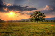 Smoky Mountains Photos - Lonely Tree In Field by Malcolm MacGregor