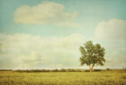 Cumulus Prints - Lonely tree in meadow with vintage look Print by Sandra Cunningham