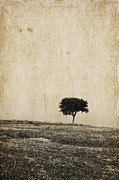 Lonely Tree Print by Iris Lehnhardt