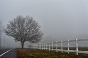 Medford Photos - Lonely Tree by Louis Dallara