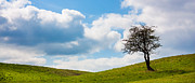 Lonely Tree Prints - Lonely Tree Panorama Print by Semmick Photo