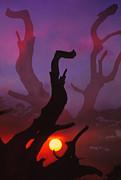 Lonely Tree Silhouette On Sunset Print by Setsiri Silapasuwanchai