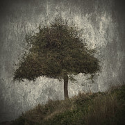 Autumn Scene Photos - Lonely Tree by Stylianos Kleanthous