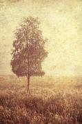 Lonely Tree. Trossachs National Park. Scotland Print by Jenny Rainbow