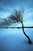 Frozen Beach Shore Prints - Lonely Winter Tree Print by Svetlana Sewell