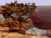 Ledge Photos - Lonesome Tree Over Grand Canyon by Cindy Wright