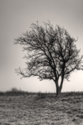 Lonesome Tree Print by Tamyra Ayles