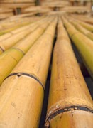 Parallel Lines Prints - Long Bamboo Poles Print by Yali Shi