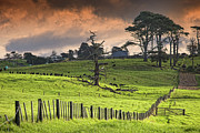 Domestic Scene Metal Prints - Long Bay Fields Metal Print by Mark Meredith