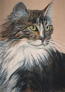 Cat Pastels - Long Hair Cat by Susan Herber