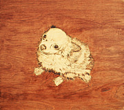 Drawing Pyrography Prints - Long Hair Chihuahua Print by Jeremy Cardenas