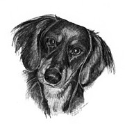 Deb Gardner - Long-haired Dachshund