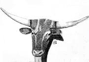 Animal Greeting Cards Drawings Posters - Long Horn Steer Poster by Gail Schmiedlin