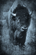 Bison Art - Long Journey by Iris Greenwell