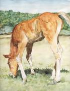 K Joann Russell Art - Long-legged Colt Horse Art Painting by K Joann Russell