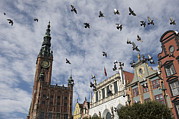 Flock Of Bird Art - Long Market With Pigeons, Town Hall by Keenpress