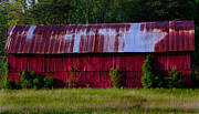 Metal Roofs Posters - Long Red Barn Across the Field Poster by Kris Napier