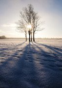 Freezing Prints - Long Shadows Print by Svetlana Sewell