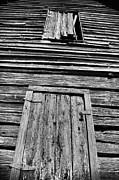 Long Tall Barn Print by Greg Sharpe