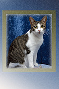 Baby Kitten Art Framed Prints - Long Tall Tilly Framed Print by Andee Photography