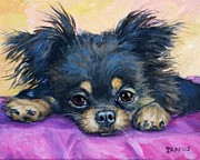 Chichi Acrylic Prints - Longhaired Chihuahua Puppy Black and Tan Acrylic Print by Dottie Dracos