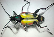 Fauna Drawings Originals - Longhorn Beetle by Mark  Loughney