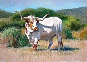 Animal Pastels Framed Prints - Longhorn Bull Framed Print by Sue Halstenberg