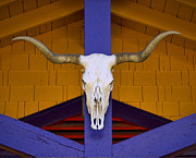 Steer Art - Longhorn by Carol Leigh