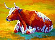 Farms Framed Prints - Longhorn Cow Framed Print by Marion Rose