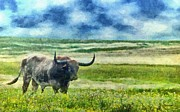 Roaming Digital Art Posters - Longhorn Prarie Poster by Jeff Kolker