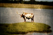 Lensbaby Photography Framed Prints - Longhorn Framed Print by Scott Pellegrin