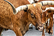 Longhorn Photo Metal Prints - Longhorns Metal Print by Toni Hopper