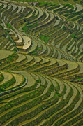 Rice Paddy Prints - Longji Rice Fields Print by Clipworks