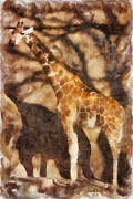 Giraffe Photos - Longnecker by Trish Tritz